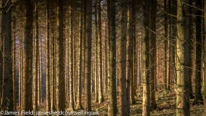 Photo showing tree trunks glowing in the sunset to illustrate holistic thinking in counselling philosophy