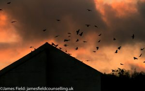 Moody image showing rooks flying against a fiery sky around what looks like a pyramid to illustrate exploring the dark side in my counselling philosophy