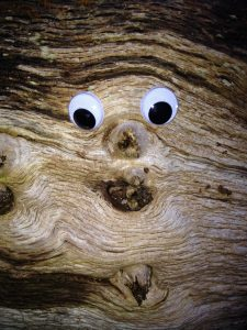 Photo of a face in a tree with google eyes to illustrate how complex real people are.